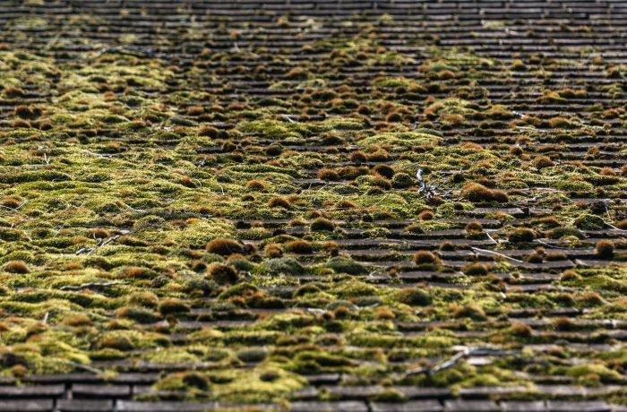House Roof Cleaning and Moss Treatment